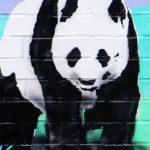 Ein Bild von einem Pandabär.